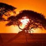 Zonne-energie, een zonnige toekomst tegemoet?